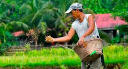 Helping Farmers in the Philippines with Accessible Financial Help