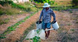 LIST: Department of Agriculture's Loan Programs for Farmers and Agripreneurs